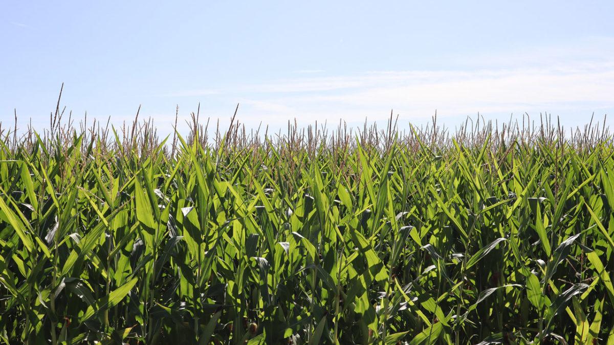 Agricoltura CIPRS